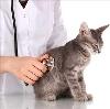 Ветеринарные клиники в Параньге